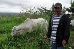 Cattle Raising Project